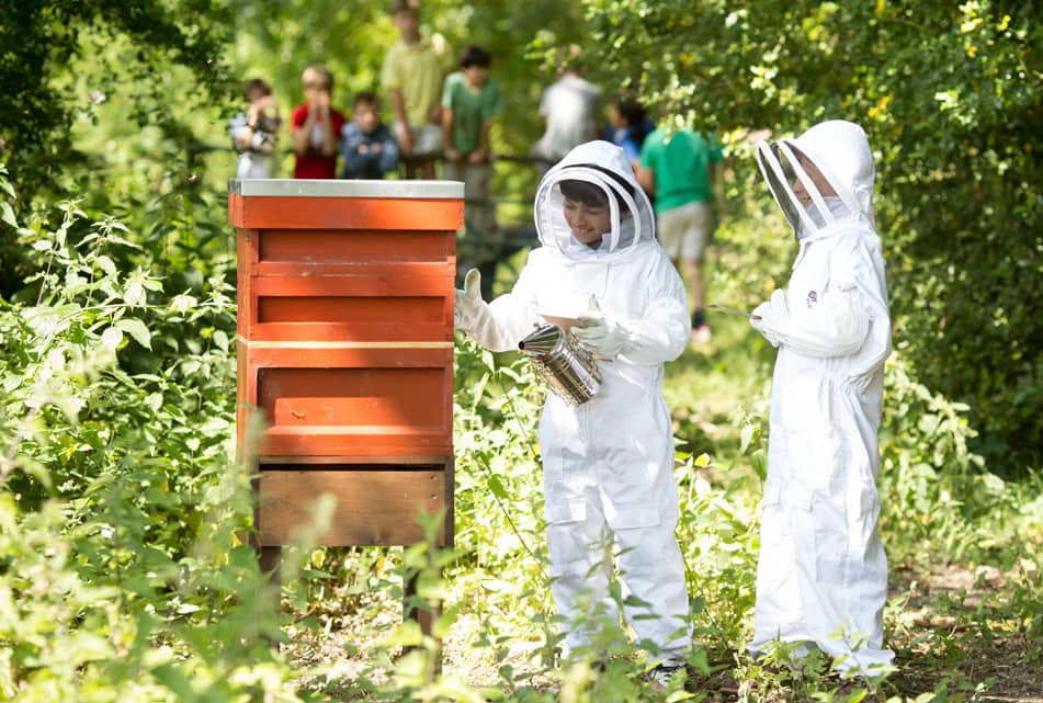 children at Sunningdale Schoolwearing protective white beekeeping gear while managing the school hives