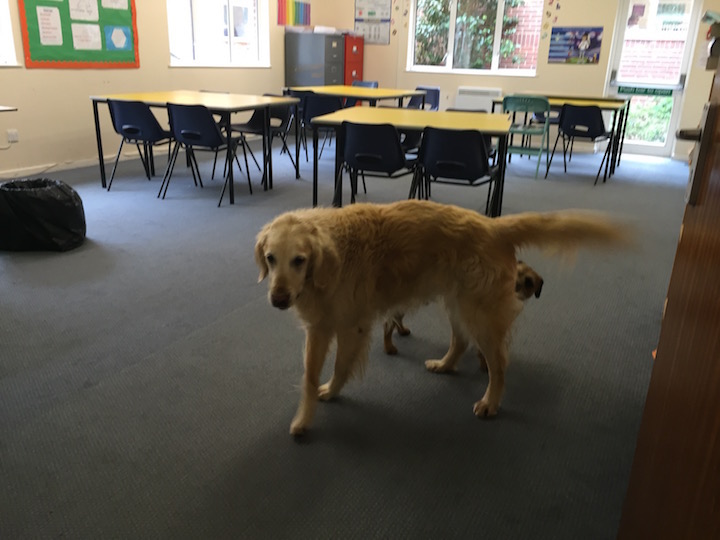 sunningdale-school-dog-in-schoolroom