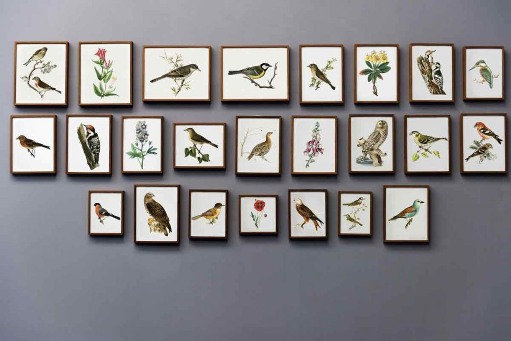 Set of framed antique prints of birds and flowers creating a contemporary gallery wall
