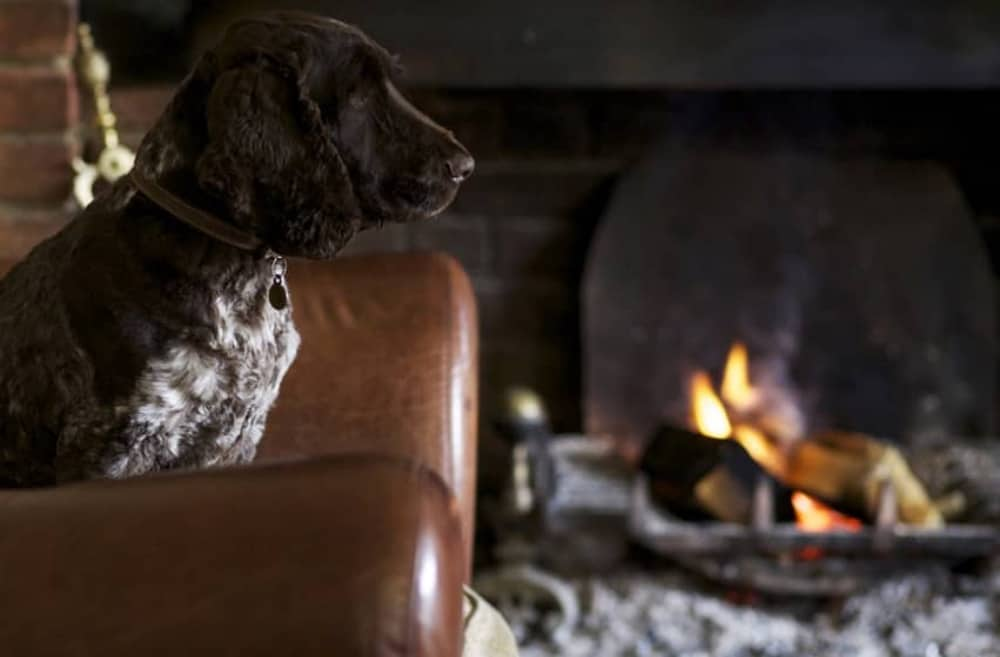 The Royal Oak Yattendon in West Berkshire's resident spaniel Percy takes up his post by one of the 3 roaring fires