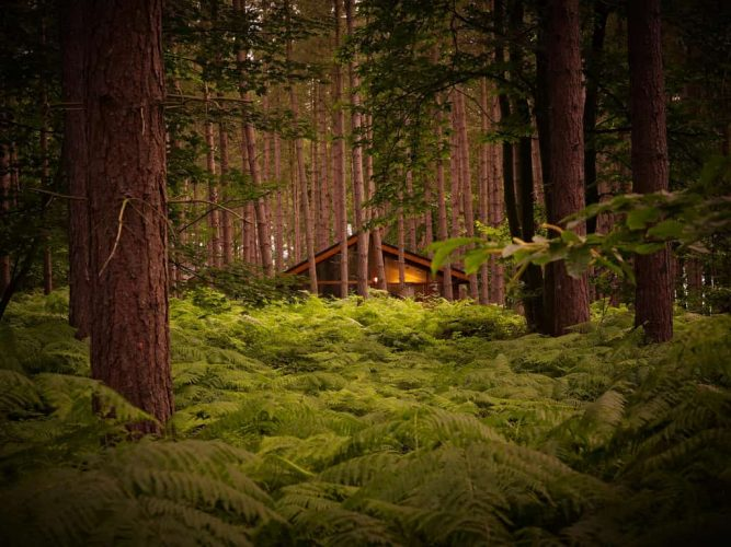 Wooden cabin tucked away in the depths of the forest – perfect family-friendly stays