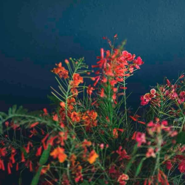 Dark blue wall with pretty bright pink and orange stems of flowers