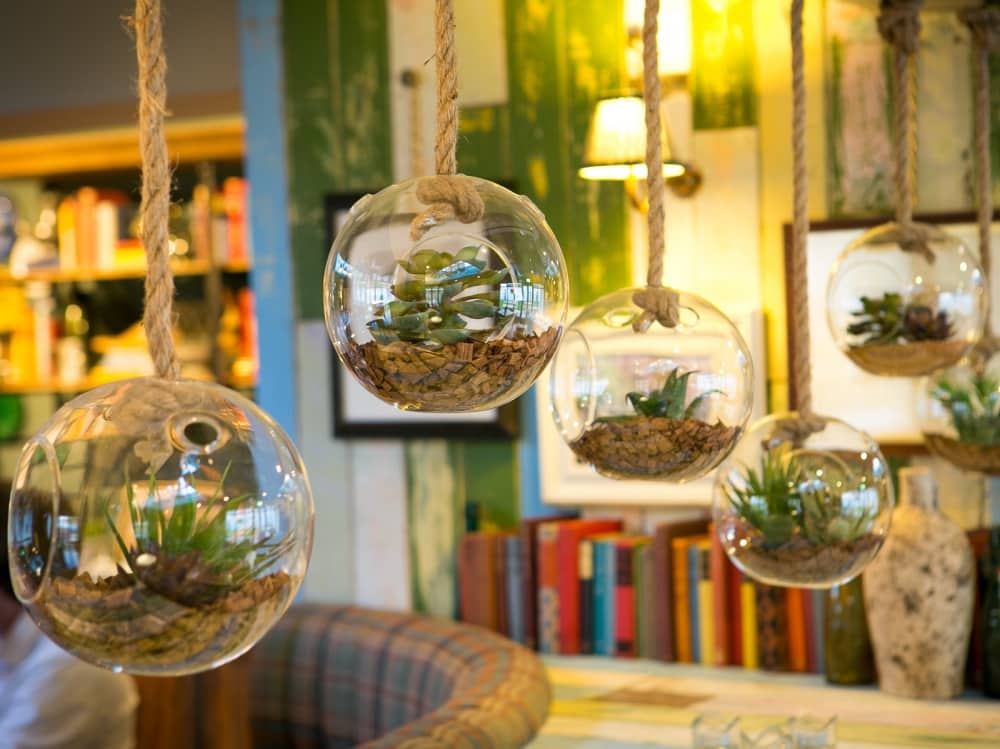 Hanging terrarium Dog and duck emmbrook stylish pub bekrshire