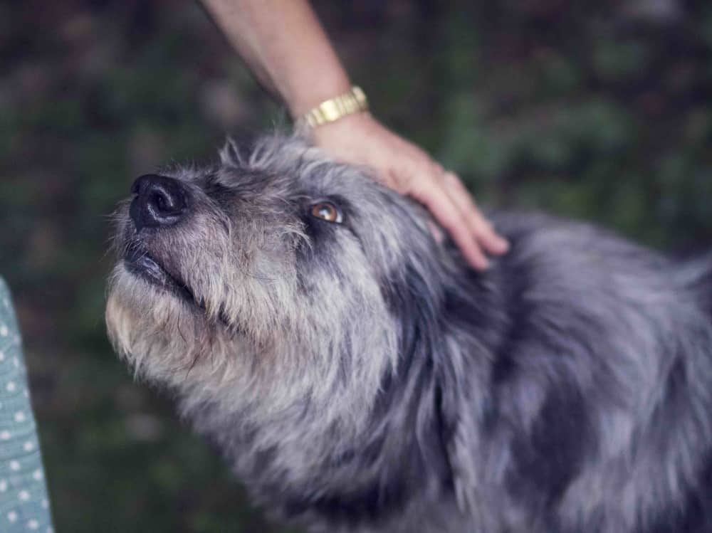 Wagging Tails Sl Branch shaggy dog gets the love and juggles