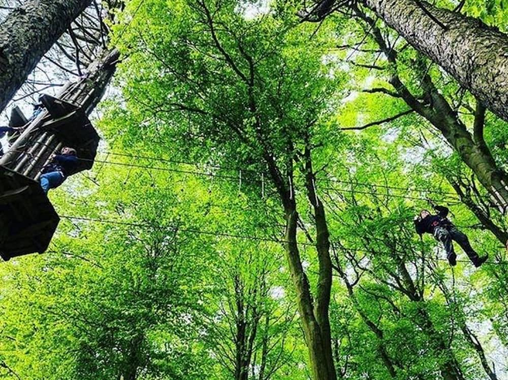 Tree canopy and high rope adventure course Go Ape Berkshire
