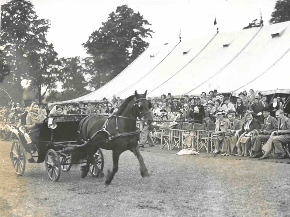HRH Princess Elizabeth driving carriage with single horse in front of the king queen and sister Royal Windsor Hose Show 1945
