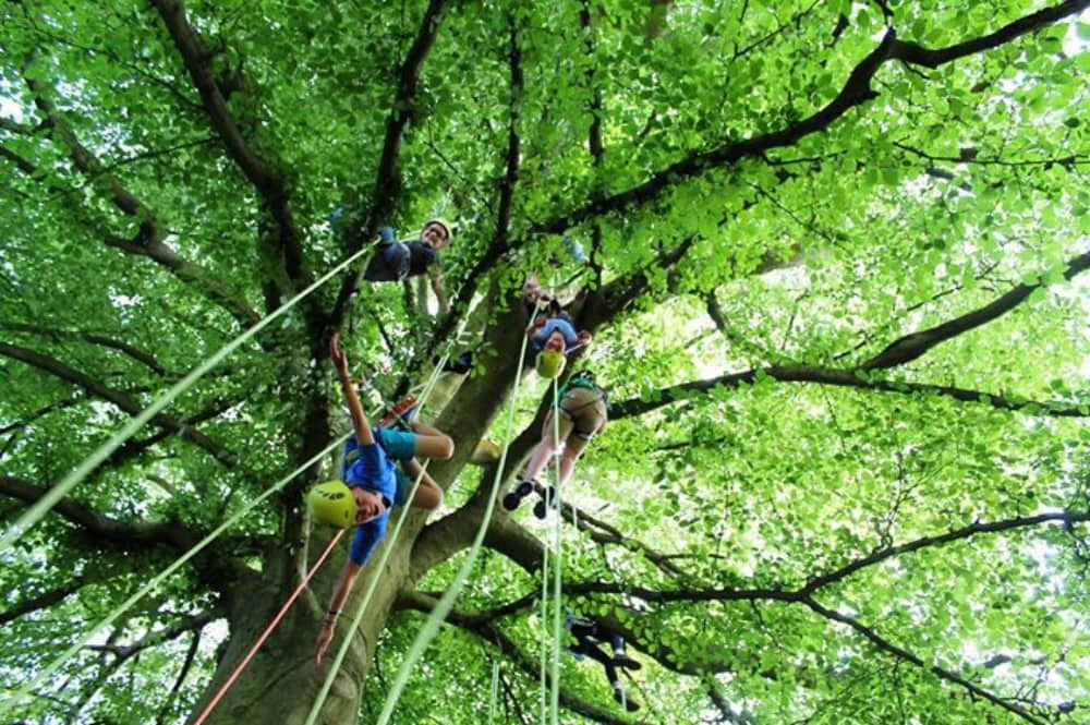 kids and adults hanging on ropes in the trees The Big Tree Clim Company Cliveden