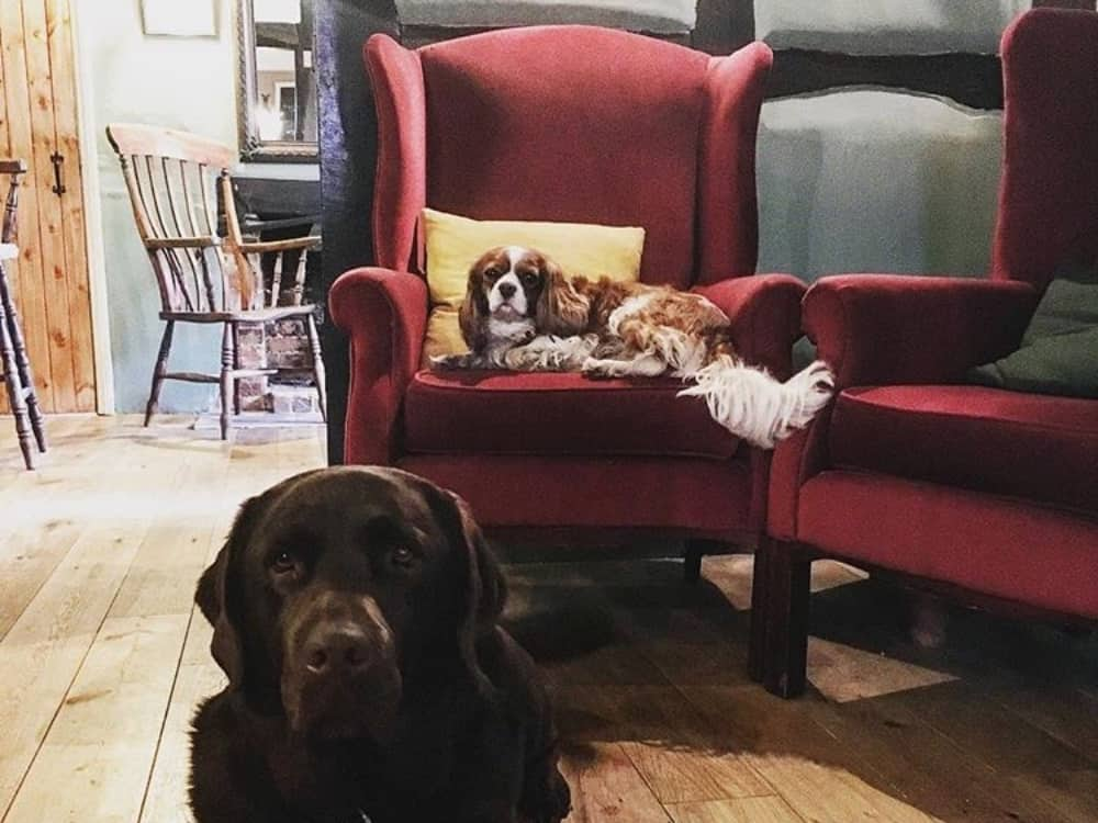 Old Boot Stanford Dingley traditional Berkshire pun labrador and king charles spaniel sat in re wingback chairs