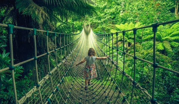 Girl walking on rope bridge in tree canopy