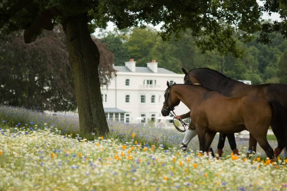 Coworth Park Ascot Berkshire white country house hotel with wild meadow and two chestnut horses lead past a tree