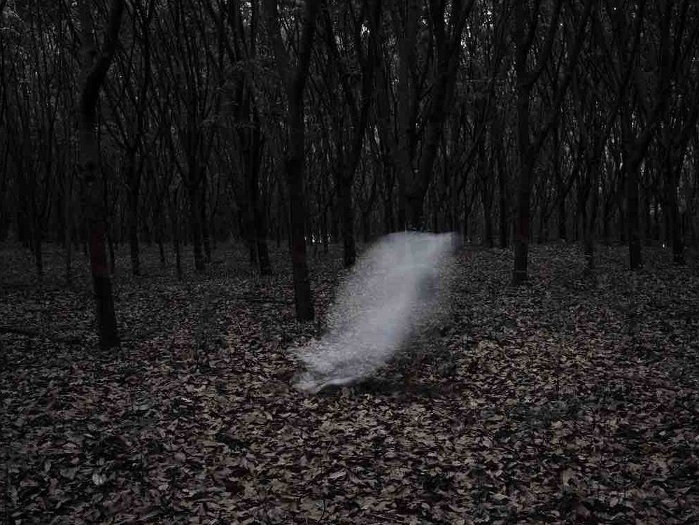 What ghostly shape in autumnal woodland