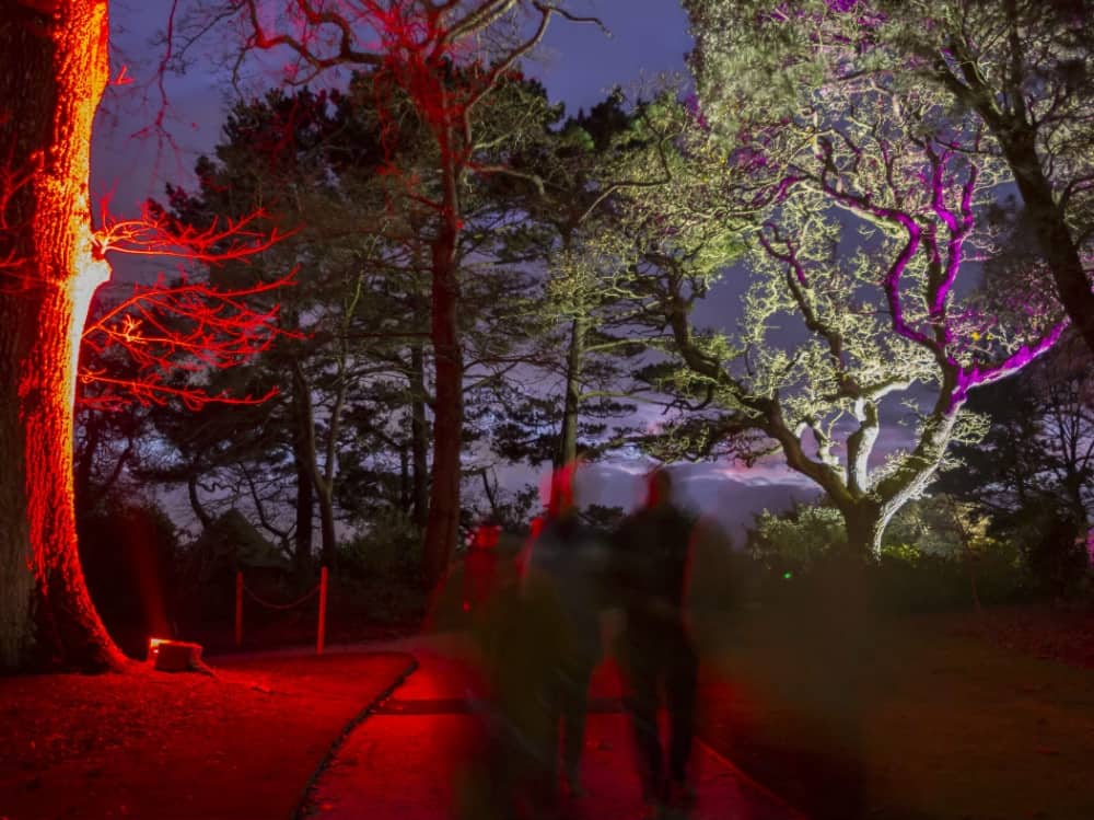 illuminated woods Basildon park Berkshire
