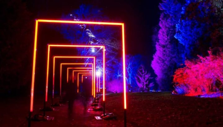 Arch of neon light and trees