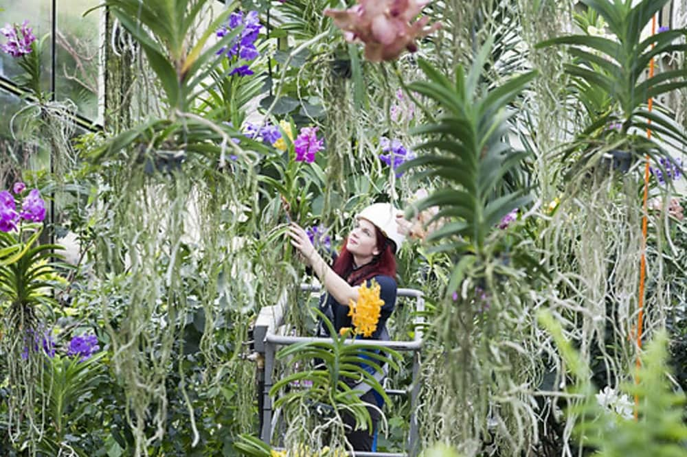 Woman in the glass orchid house at Kew Gardens London