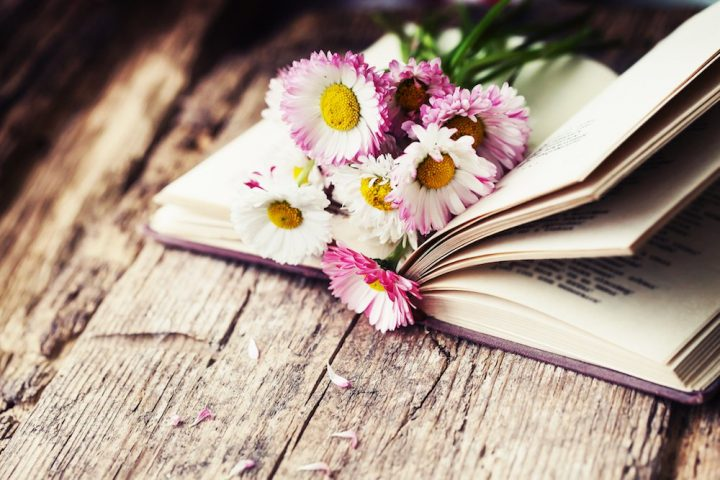 Book on woodden table with pink daisies resting in between pages