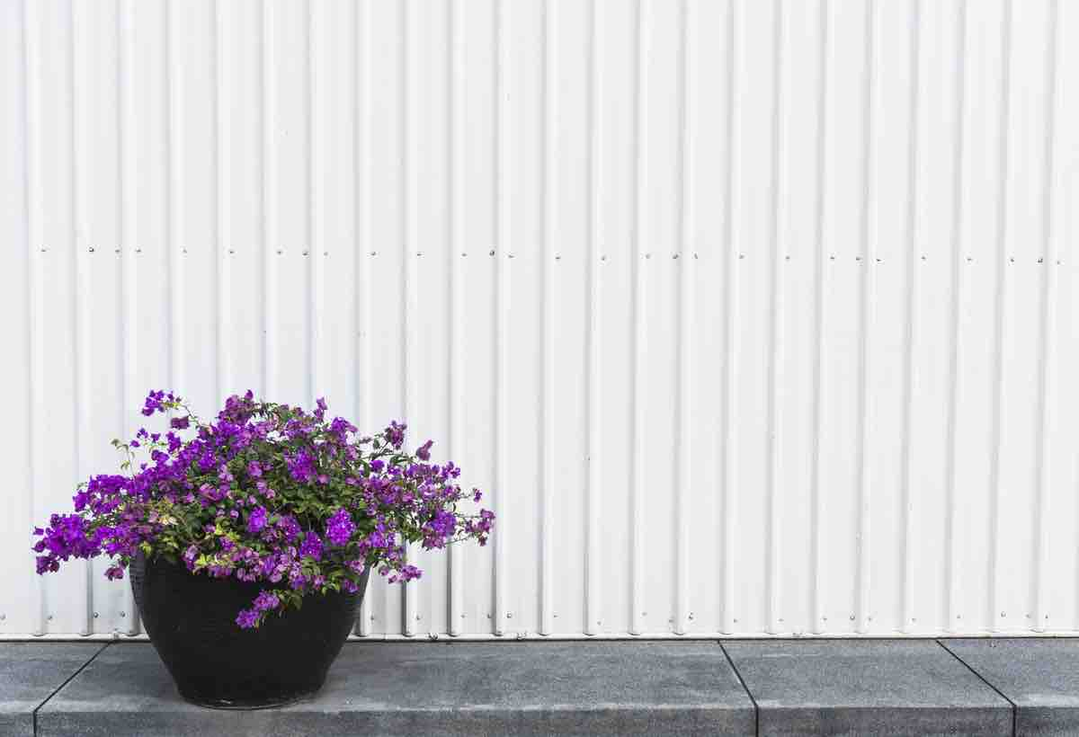 White corrugated wall and pot with flowers