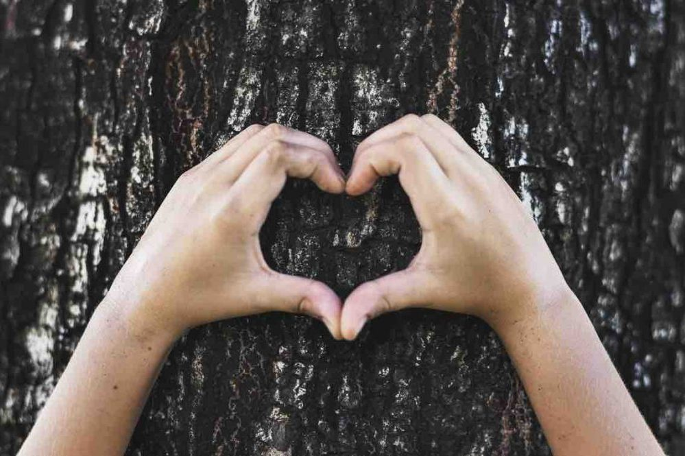 Hands make a heart again a tree eco friendly kind to planet sustainability