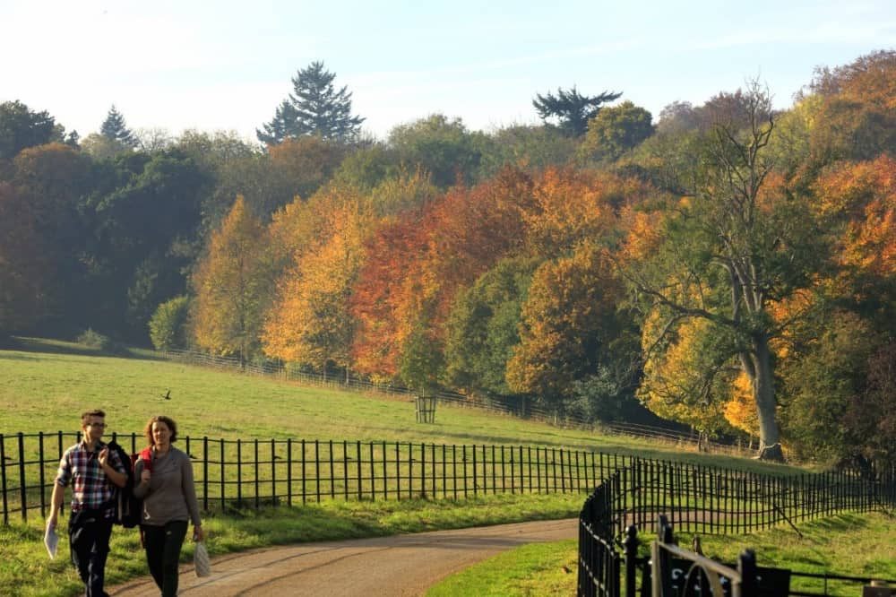 Basildon Park Autumn walk up two people walking up the gravel drive iron railings and autumn trees