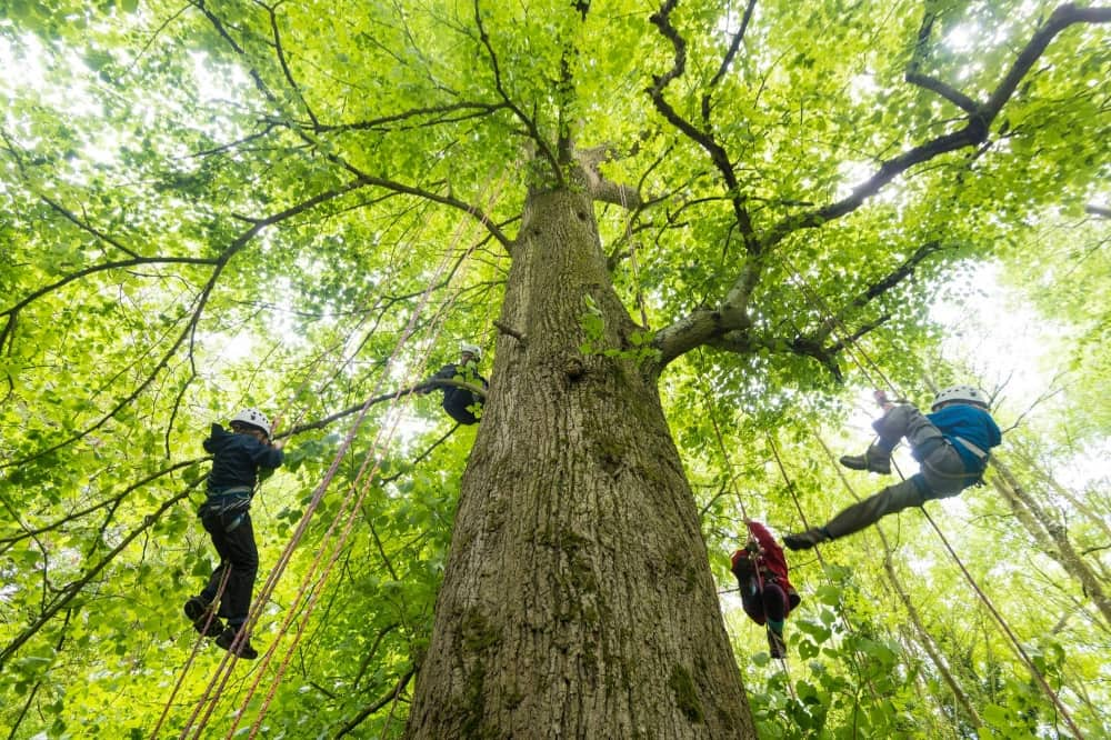 Big tree climbing company cliveden half term tree canopy people dangling from ropes