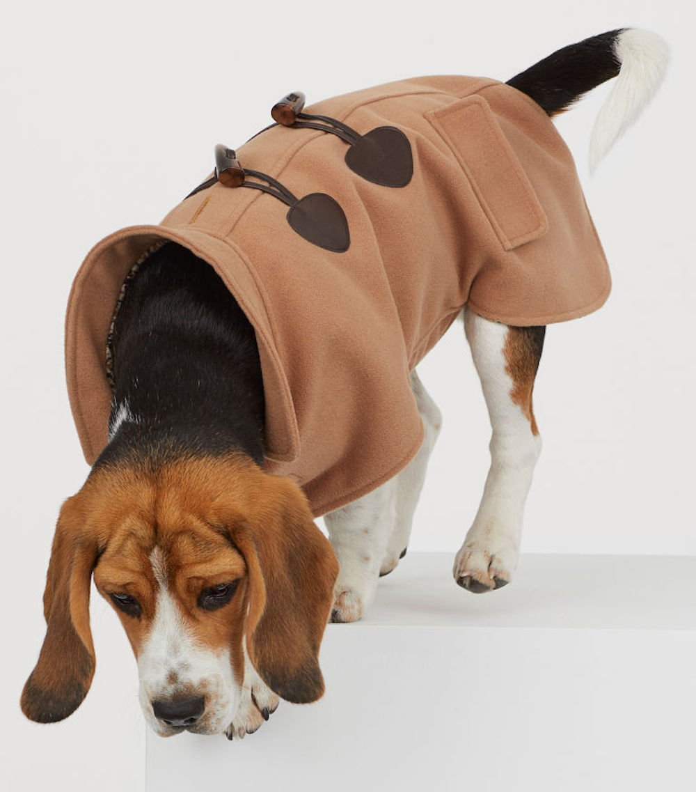 HM Dog coat beagle wearing a duffel coat in camel
