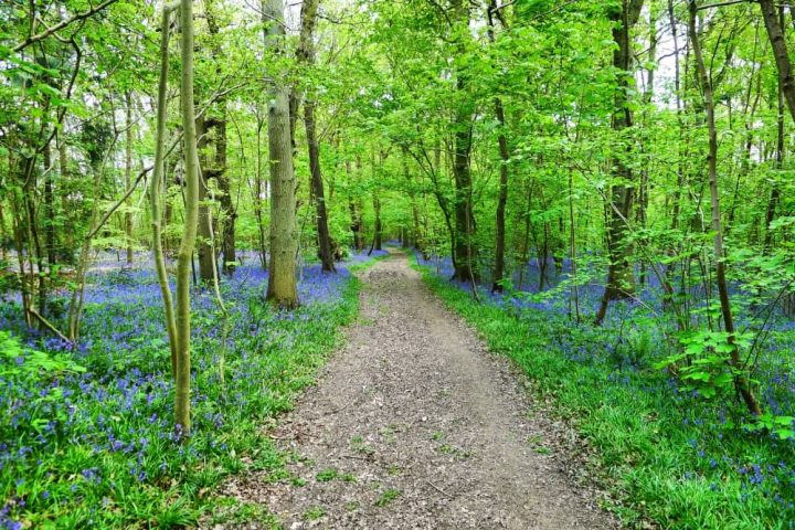BISHAM WOODS WALK