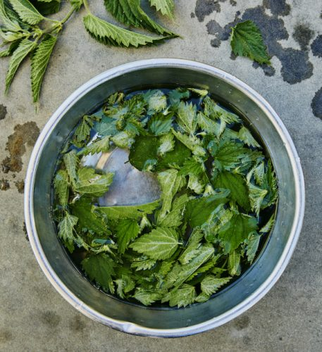 Nettles in a bowl The Pig recipe