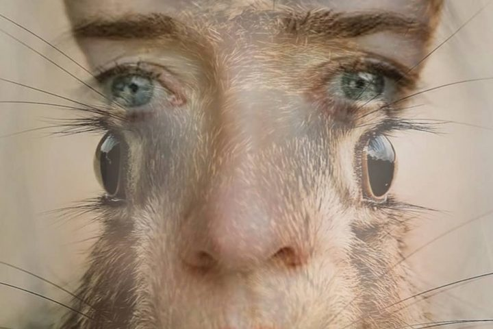 Hare and human face for theatre production – Scary