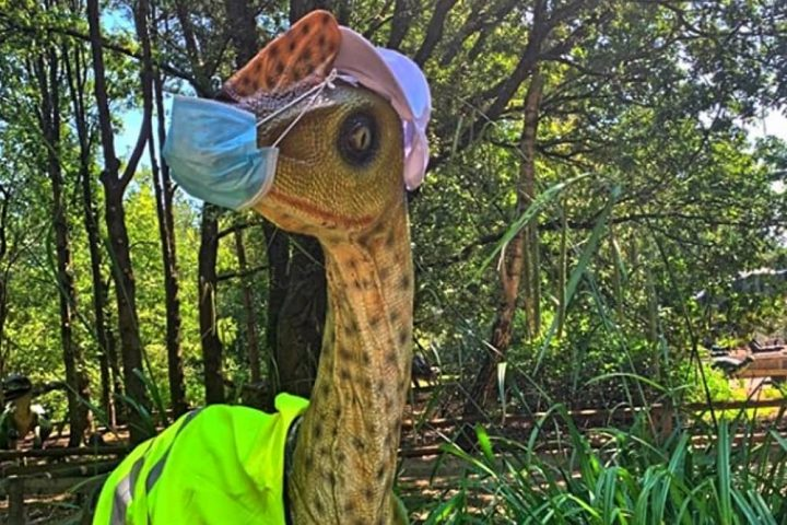 Wellington Country Park dinosaur in face mask and high vis jacket