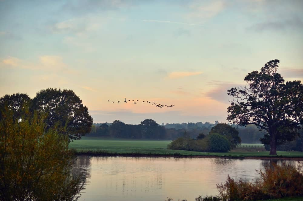 Coworth Park-Autumn grounds-lake and birds