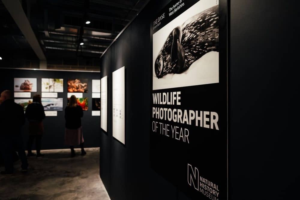 The Base Greenham Common Newbury Wildlife Photographer of the year exhibition