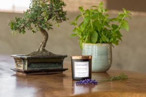 Apothenie Candles bonsai