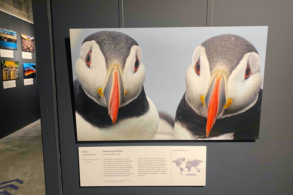 The Base WPOTY puffins