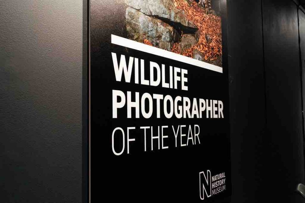 Wildlife Photographer of the Year Exhibition at The Base Greenham Commo